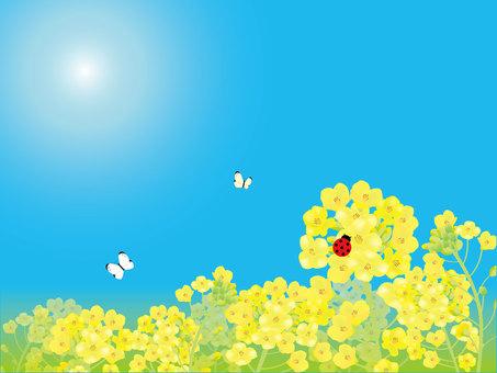 유채 꽃밭과 무당 벌레