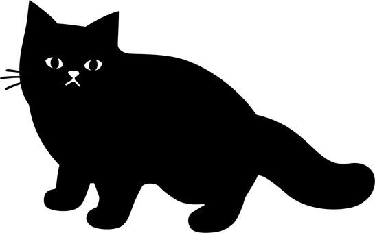 서 이쪽을보고있는 검은 고양이
