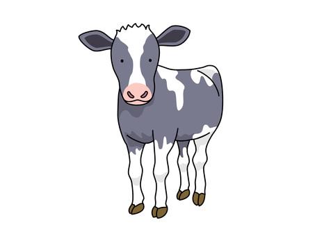 Cow (calf)
