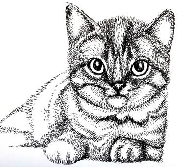 Cat pen drawing # 4