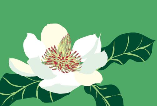Spring white magnolia flowers