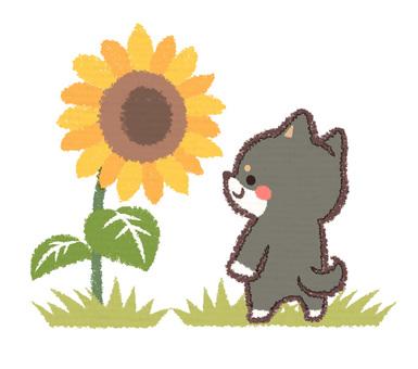 Sunflower and ebony dog