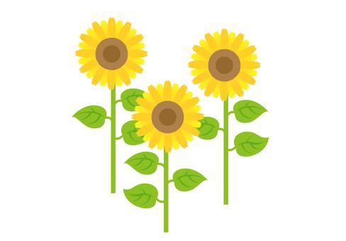 Sunflower motif