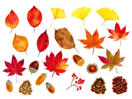 Autumn leaves set (color pencil drawing)