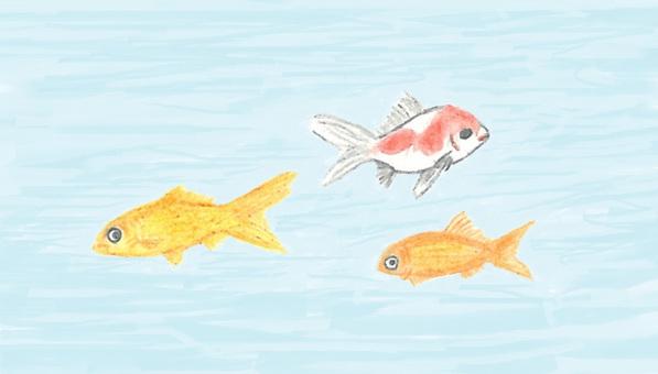 Goldfish underwater