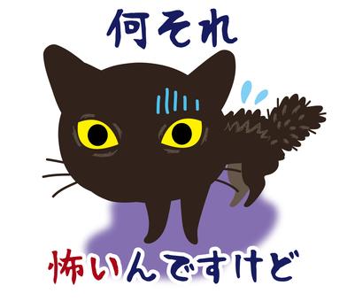 Scared black cat