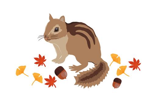 Chipmunk's illustration
