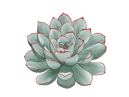 다육 식물 꽃 화창한