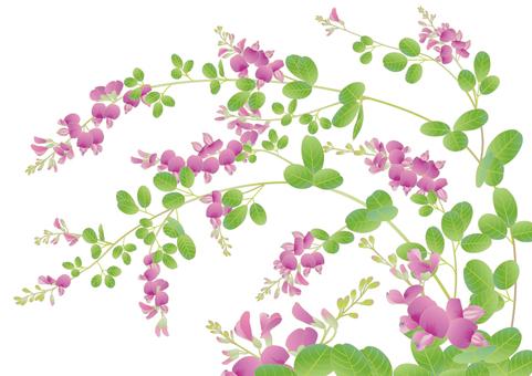 秋萩_赤紫