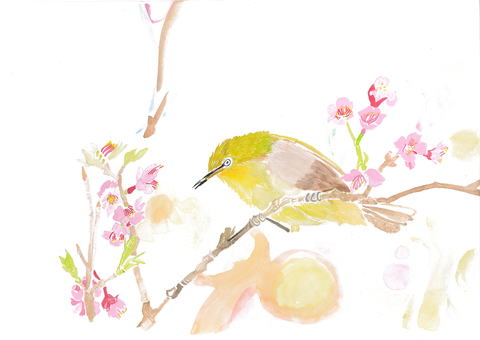 White-eye and cherry blossom
