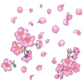 무작위로 날리는 벚꽃