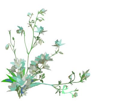 흰 꽃 여름