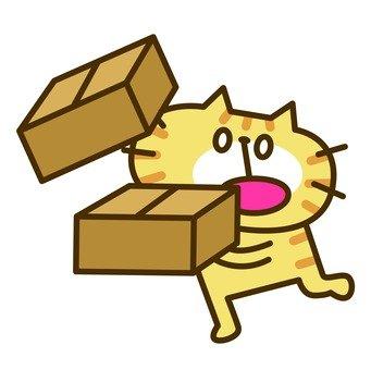 Cat Luggage