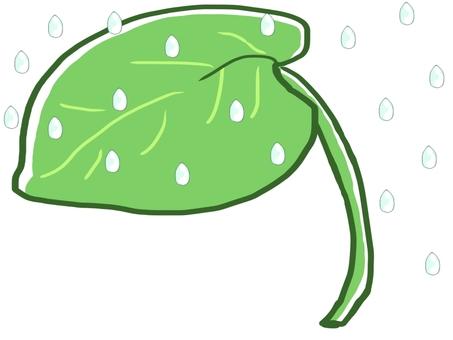 Lotus leaf getting wet in the rain