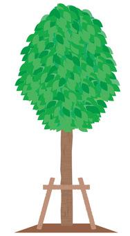 Street tree