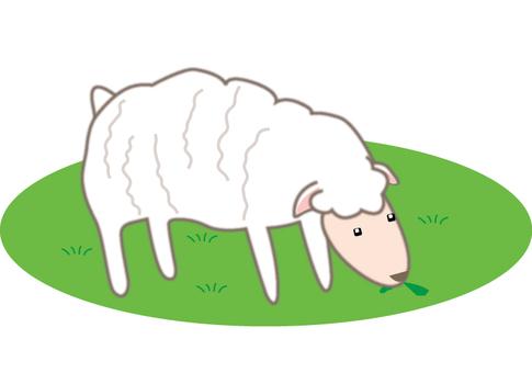 Sheep grass