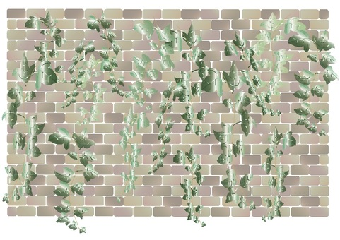 磚·常春藤