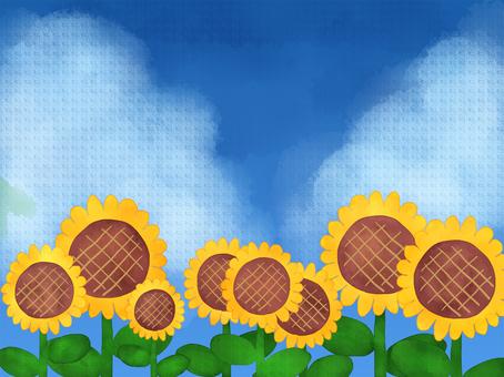 Sky and sunflower