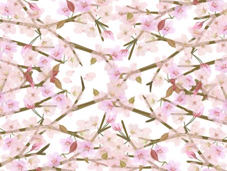 桜のフレーム 15