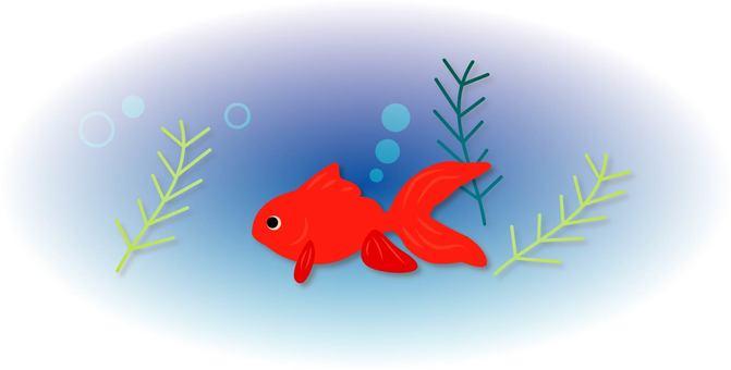 Goldfish ~ Type F ~