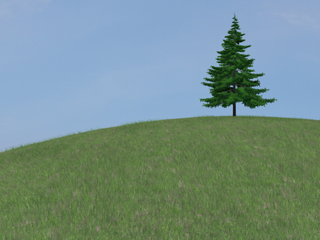 fir tree on a hill