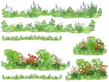 식물 라인