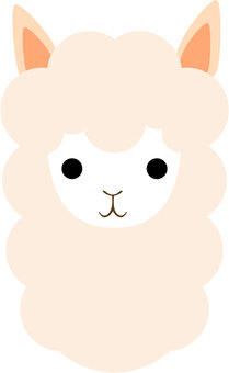 Head of Alpaca
