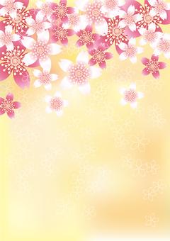 벚꽃의 꽃 80
