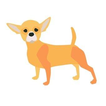 Chihuahuasa