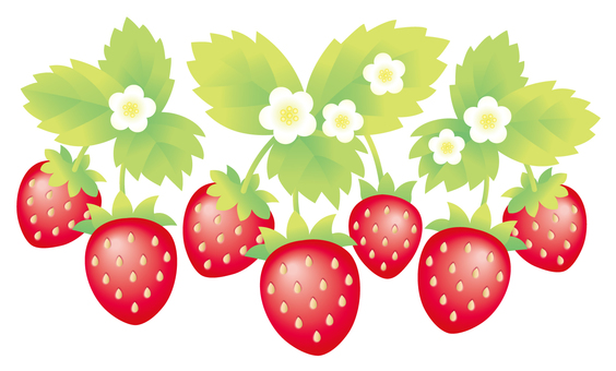 Strawberry Material 4