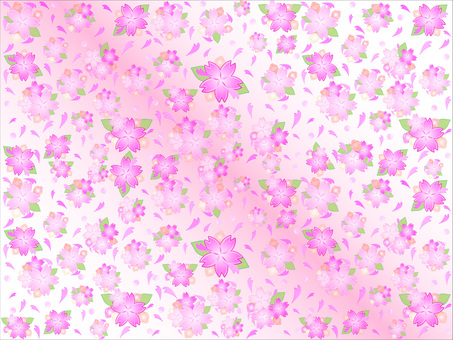 Cherry blossom background Pink & amp; white