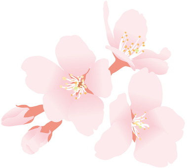 Sakura 2