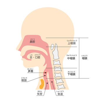 Nasal throat section