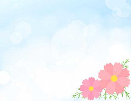 코스모스 배경 _ 하늘과 코스모스
