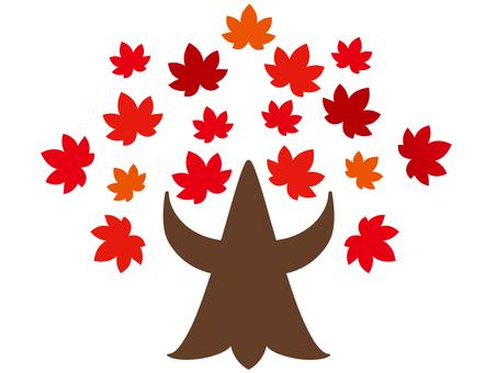 Autumn leaves maple tree
