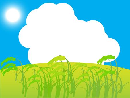 Ripe harvest 4 1600 × 1200 px