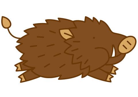 Wild Boar 3-4c