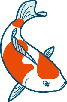 鯉魚的插圖(普通)