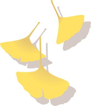 Gingko, ginkgo, yellow,