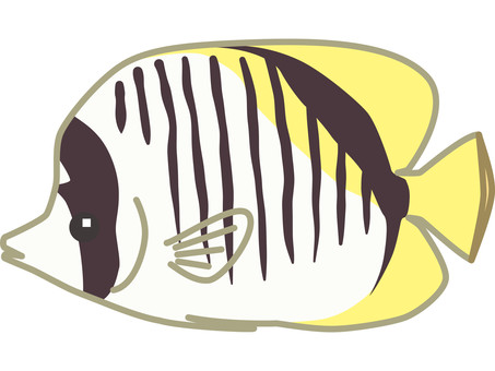 Whitefish butterflyfish