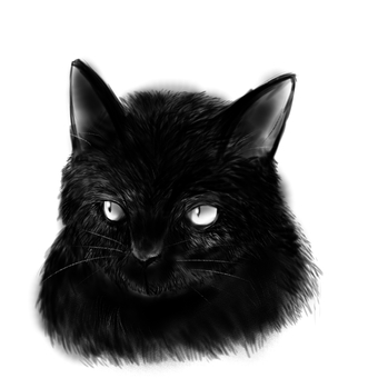 Cat - Sketch
