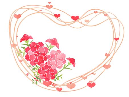 Carnation 05