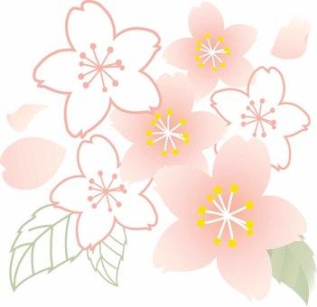 Cherry blossom material 01