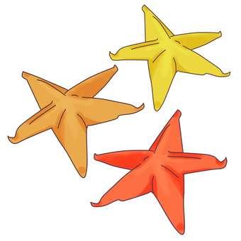 Starfish x 3