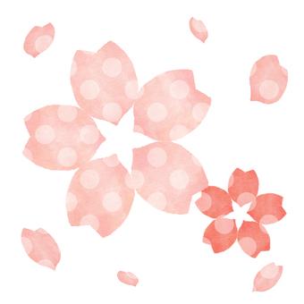 Sakura 19