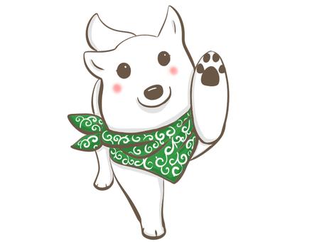 做高接觸的白色狗