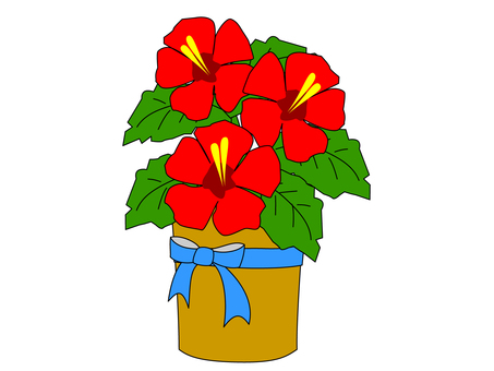 Hibiscus ~ Bouquet / Flower Gift