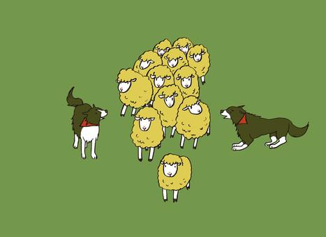 Shepherd grazing 2