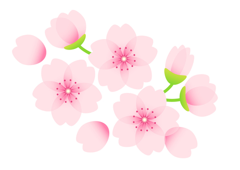 벚꽃 소재 05