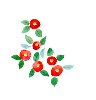 Camellia ④